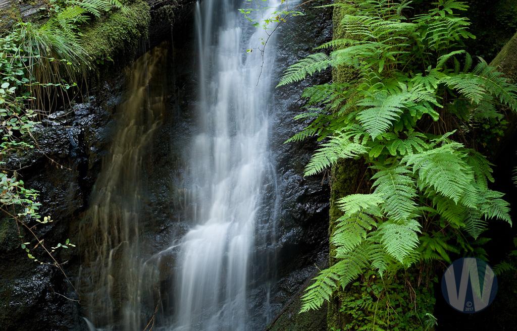 Fern Canyon Waterfall